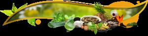 herbal_banner
